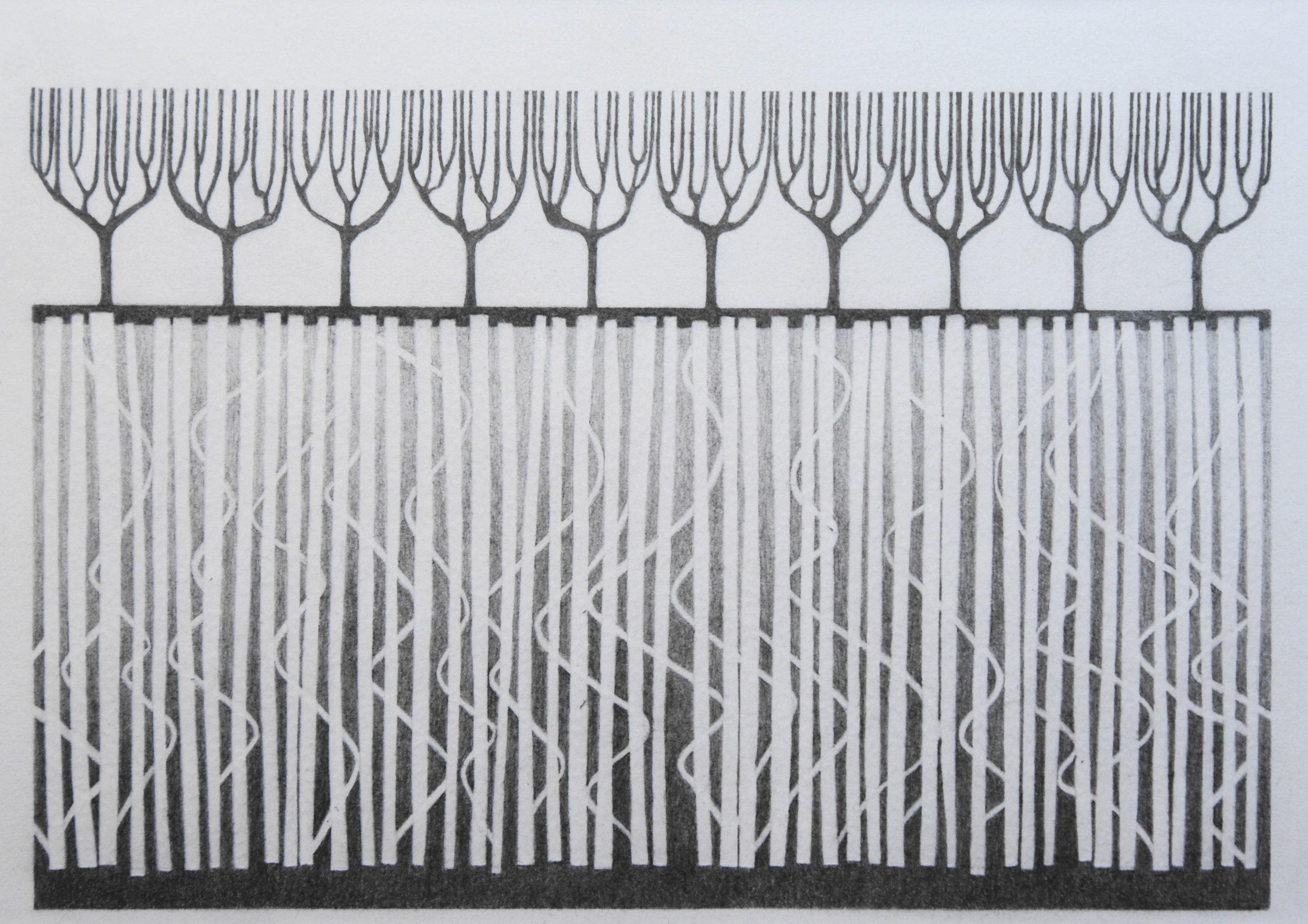 Boomwortels I, 2017 (blinddruk, potlood) 24 cm x 34,5 cm