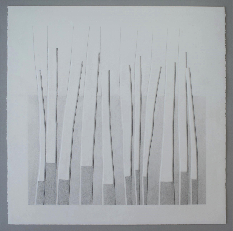 Groei II, 2018 (blinddruk, potlood) 55 cm x 55 cm