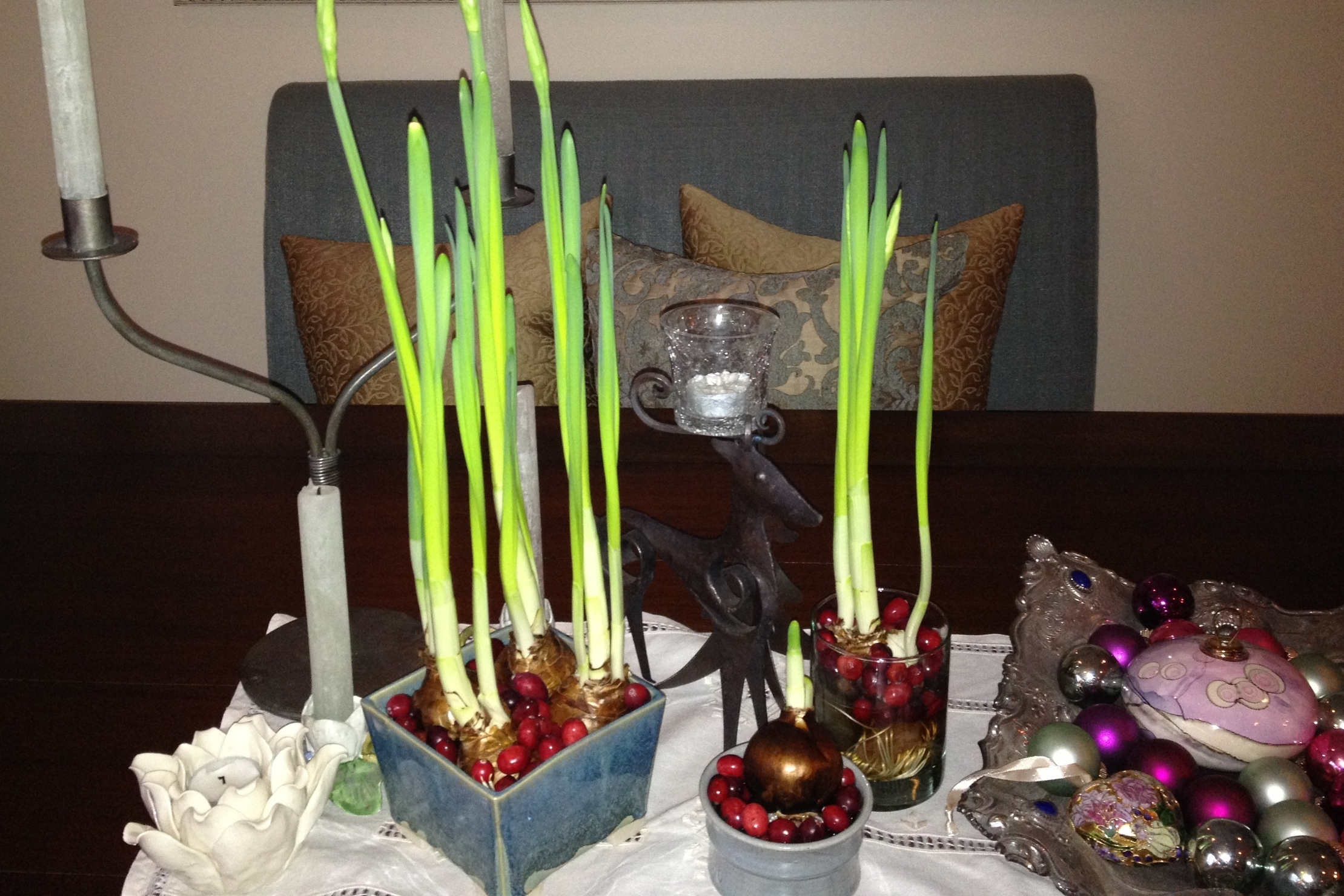 Paperwhites all ready to gift...they will be beautiful when they bloom!