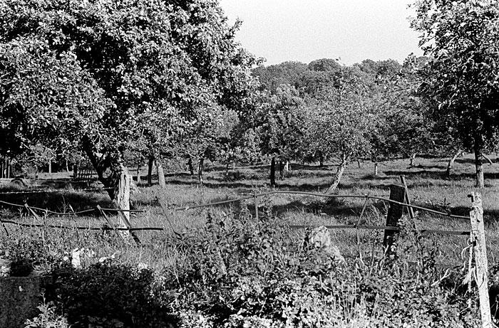 The Naish Orchard STUNICGLAST003