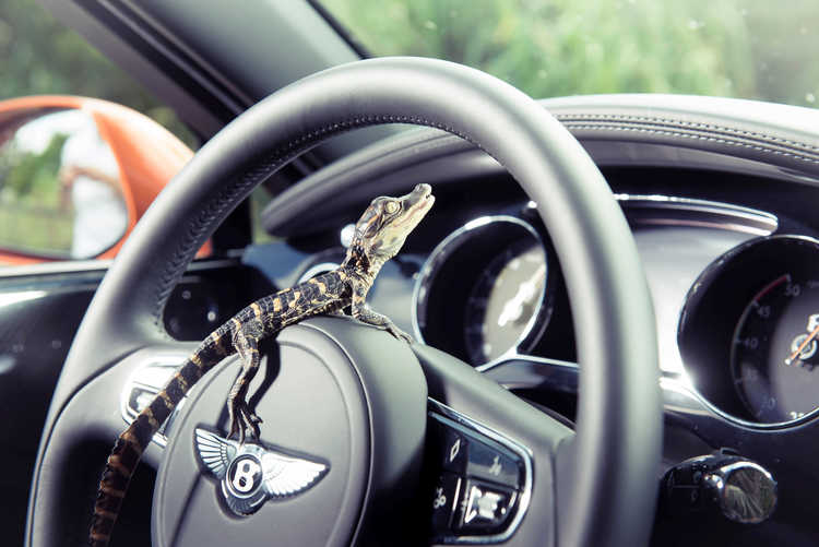 bentley-mulsanne-steering-aligator.JPG