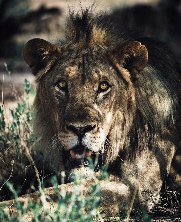 African-Wildlife-Photography-Naude-Heunis-Artists-Legends.jpg