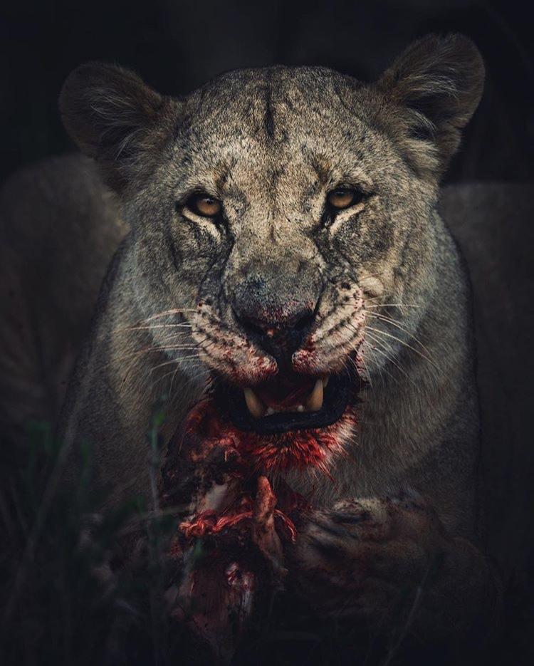 African-Wildlife-Photography-Naude-Heunis-Artists-Legends-3.jpg