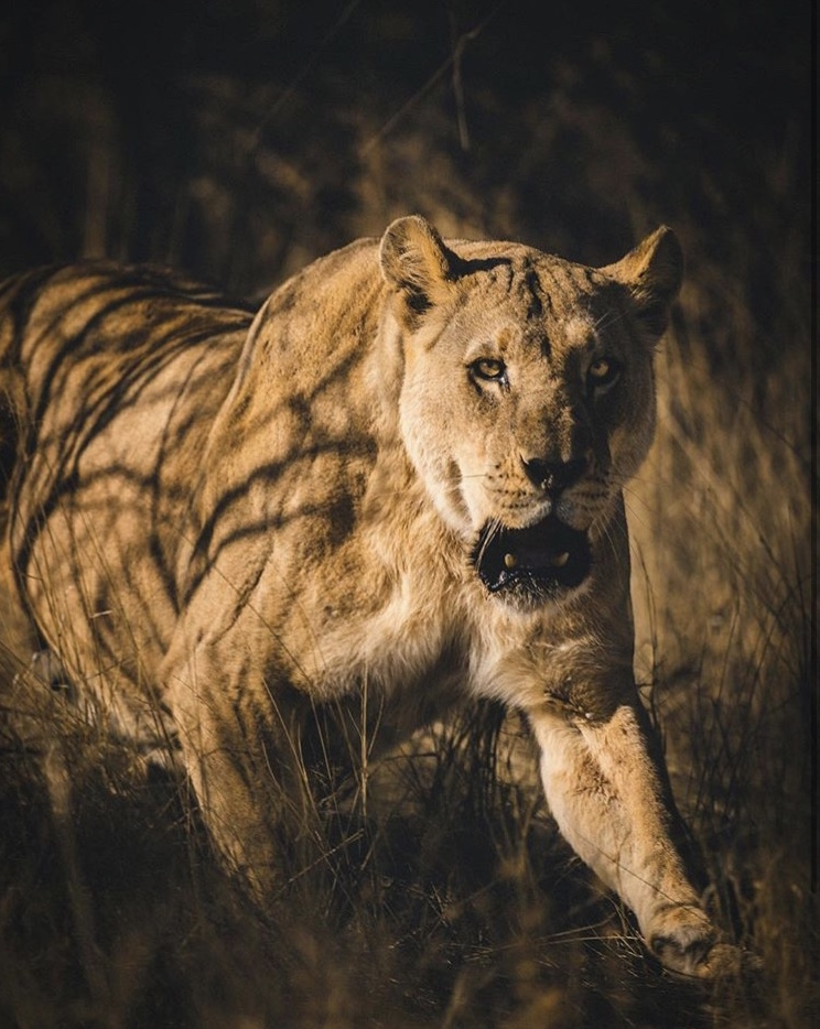 Wildlife-Photography-Naude-Heunis-Artists-Legends_04.jpg
