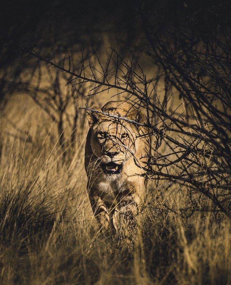 Wildlife-Photography-Naude-Heunis-Artists-Legends_03.jpg