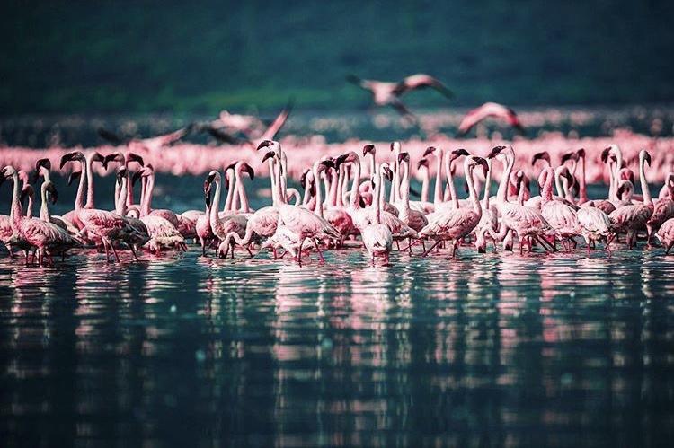 Wildlife-Photography-Naude-Heunis-Artists-Legends_09.jpg
