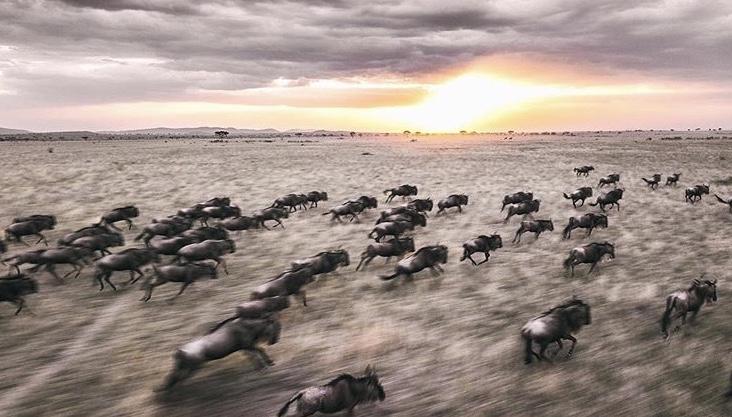 Wildlife-Photography-Naude-Heunis-Artists-Legends_10.jpg