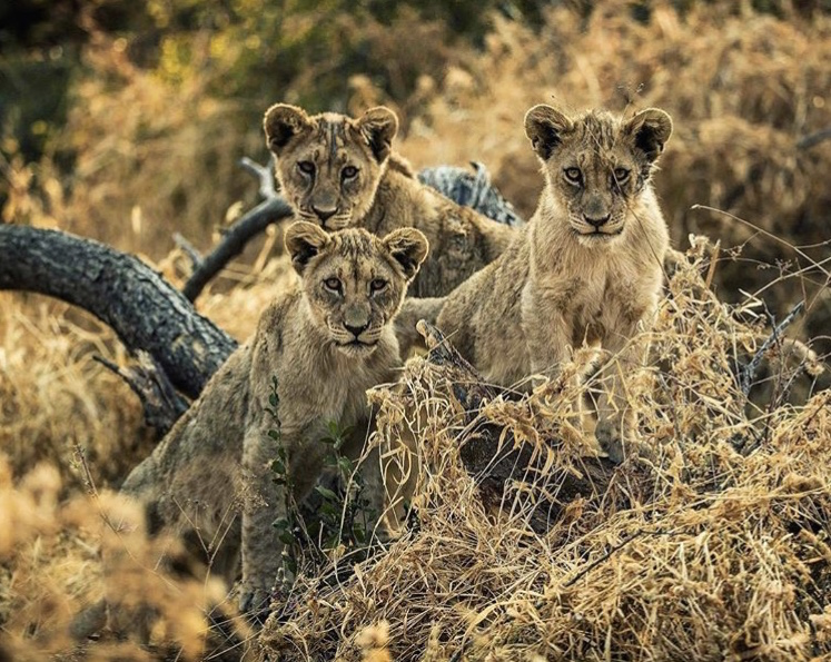 Wildlife-Photography-Naude-Heunis-Artists-Legends_11.jpg