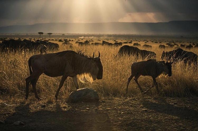 Wildlife-Photography-Naude-Heunis-Artists-Legends_15.jpg