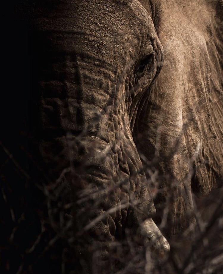 Wildlife-Photography-Naude-Heunis-Artists-Legends_19.jpg