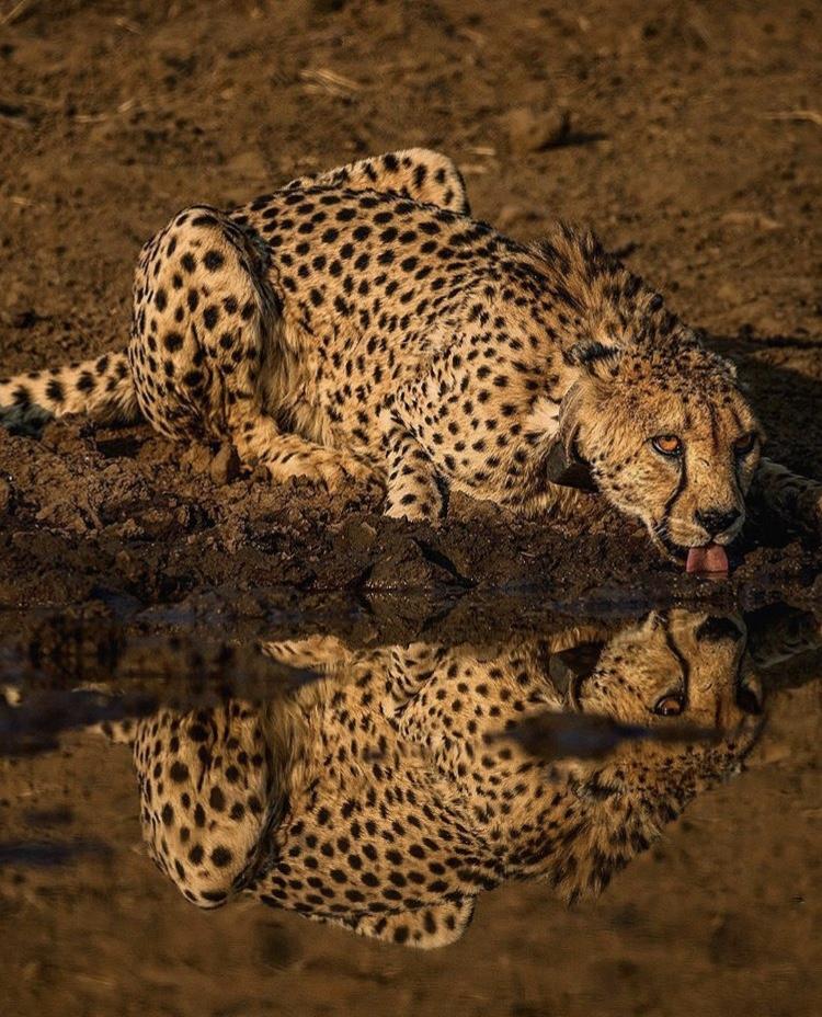 Wildlife-Photography-Naude-Heunis-Artists-Legends_21.jpg