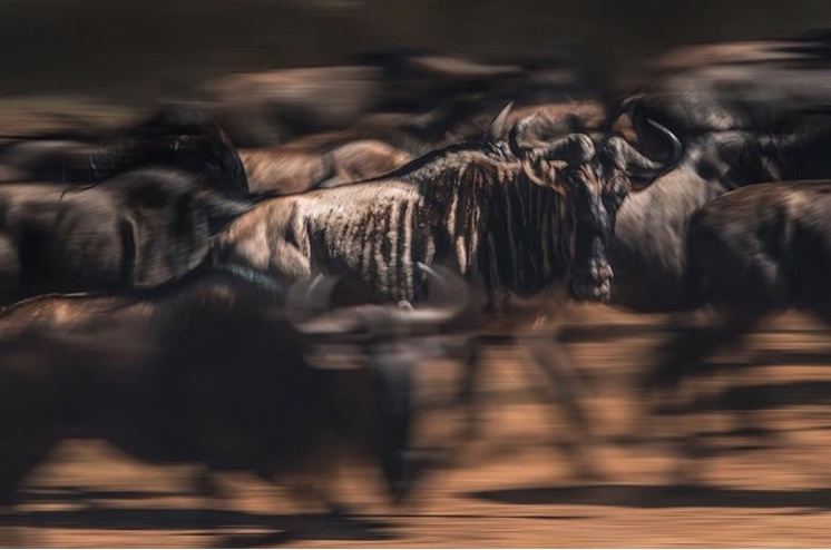 Wildlife-Photography-Naude-Heunis-Artists-Legends_23.jpg