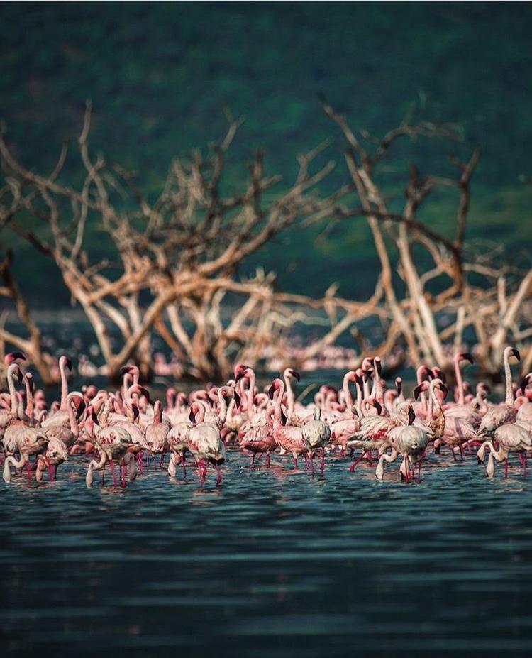 Wildlife-Photography-Naude-Heunis-Artists-Legends_24.jpg