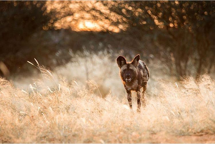 Wildlife-Photography-Naude-Heunis-Artists-Legends_25.jpg