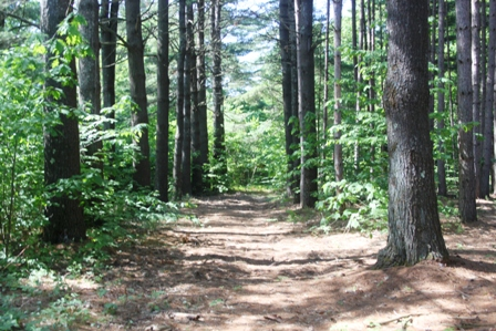 Wild Goose Pine Grove and Path