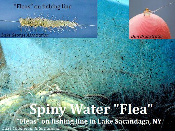 SWF_NY-Sacandaga-Lake-Champlain-International_web.jpg