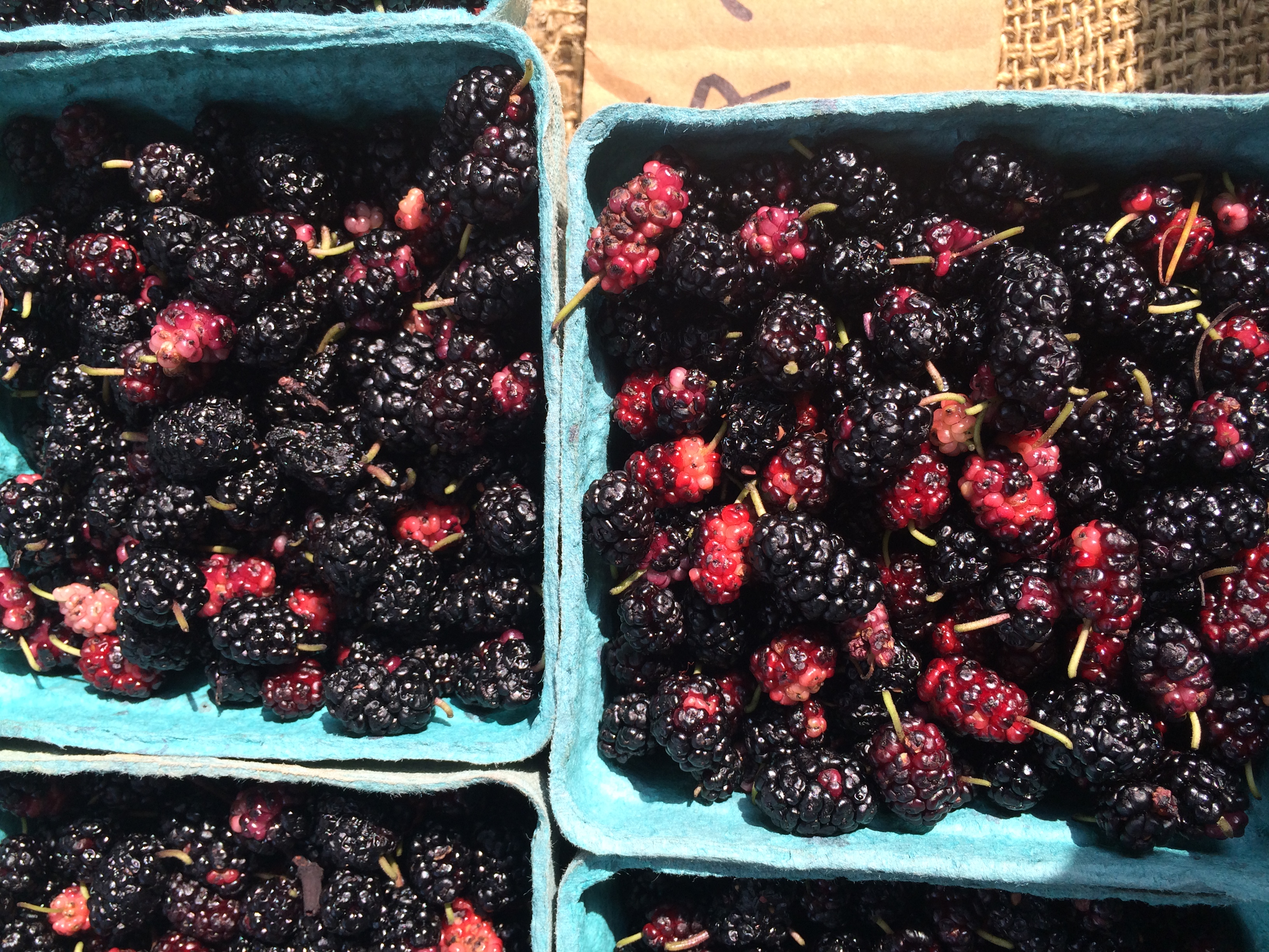 Mulberries from Moon Shadows Farm at Easton Farmers' Market.