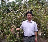 Takayuki Suzuki brought this esoteric Peruvian berry to the masses