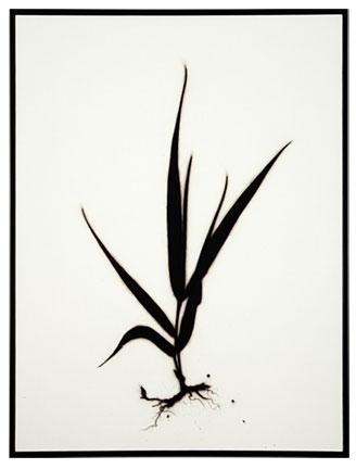 Borrello_Marshgrass.jpg
