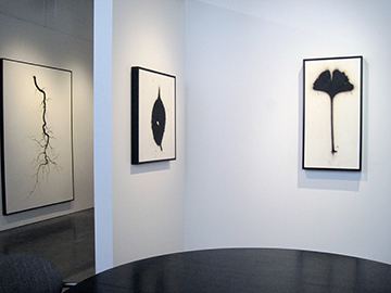 Brian Borrello TOOTH & CLAW installation_0345 copy.jpg
