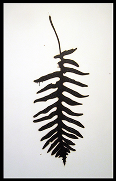 Fern with Spores