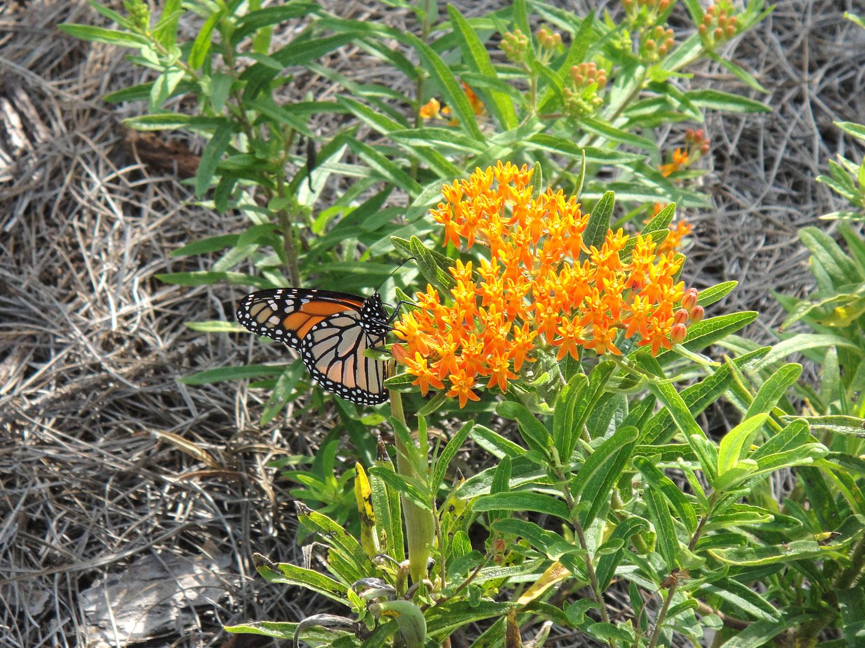 butterfly_garden_3_web.jpg