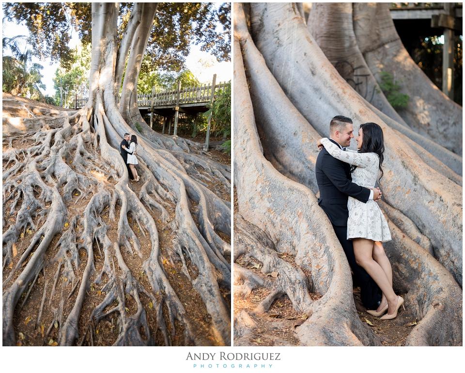 Balboa Park Tree