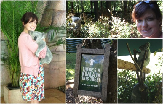 Koalas at Australia Zoo. The only place where you should give them a cuddle.