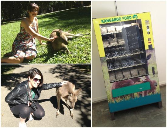 Stroking kangaroos in Roo Heaven and the 'Roo Food' vending machine.