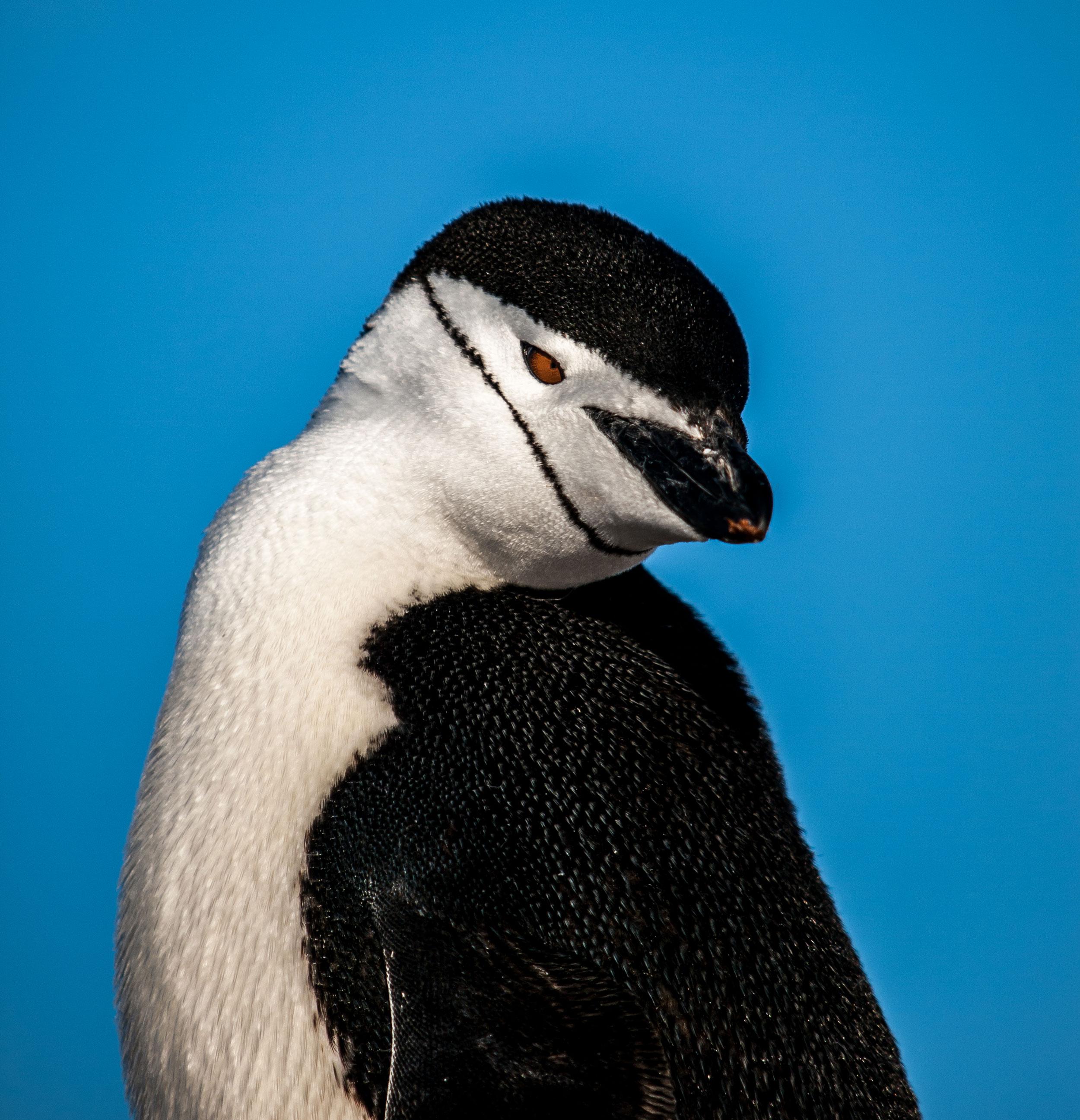 Penguinos-23.jpg