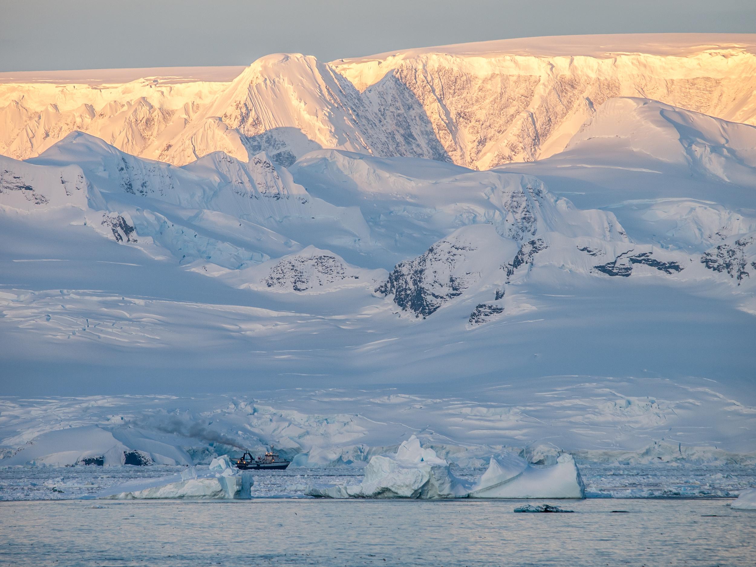 Humpback whale Photo: Frank Grebstad