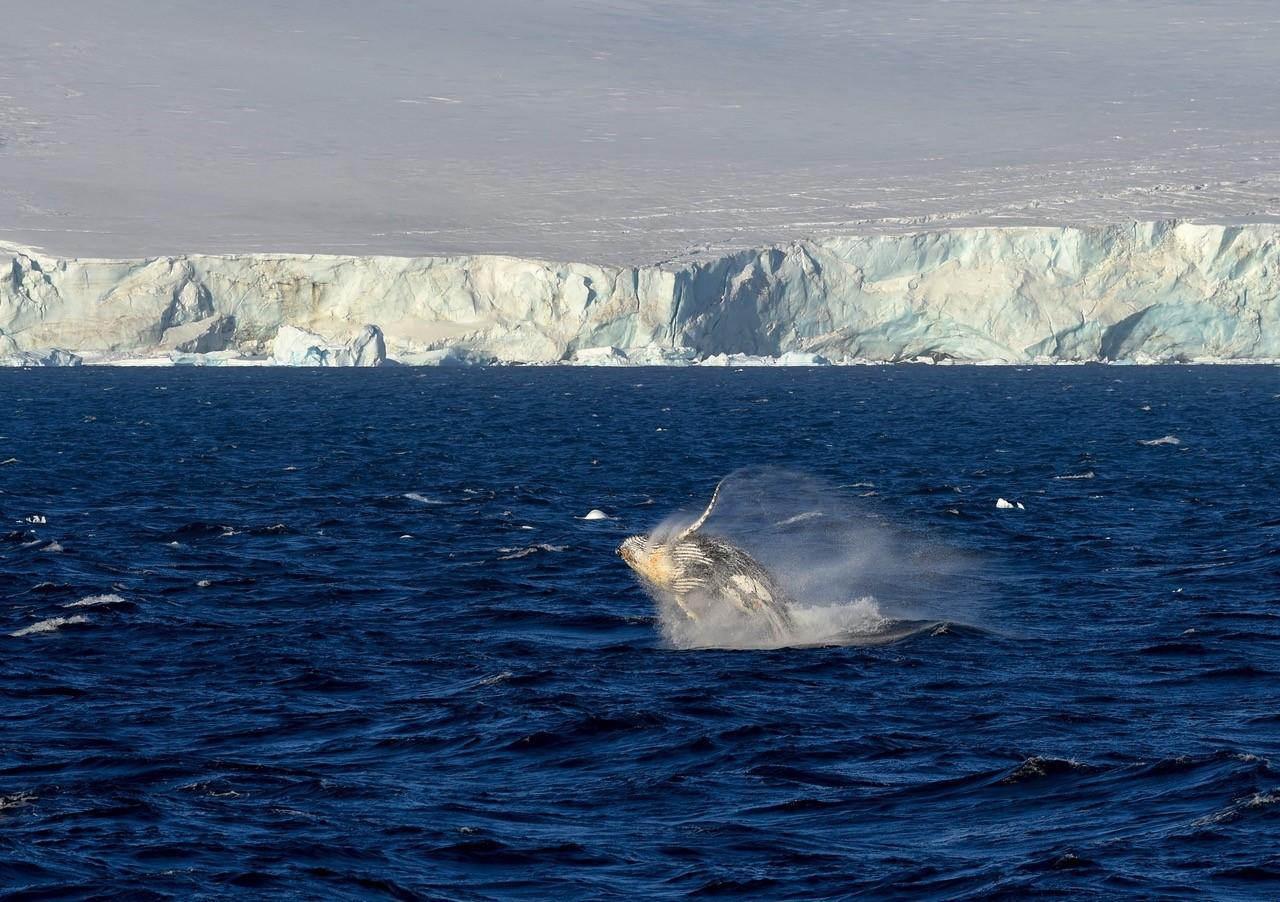 Whale_1.jpg