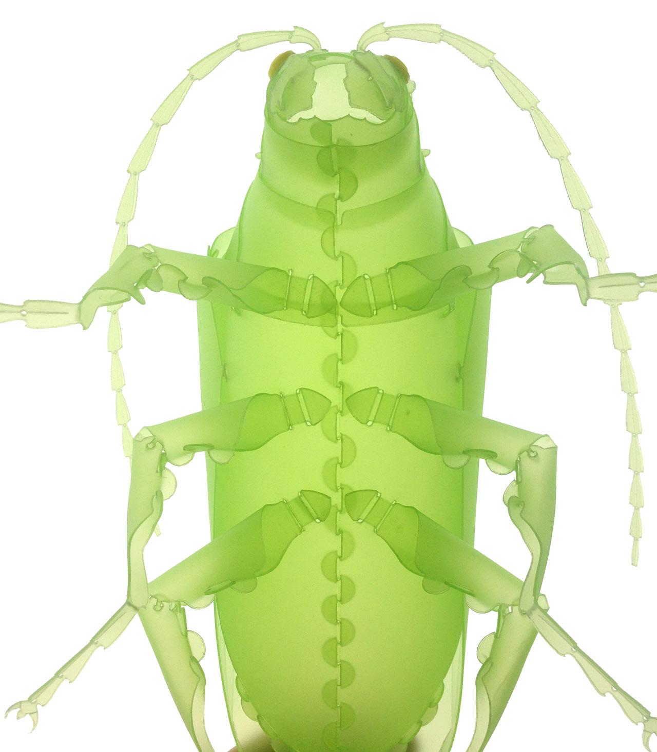 Bug-3.jpg