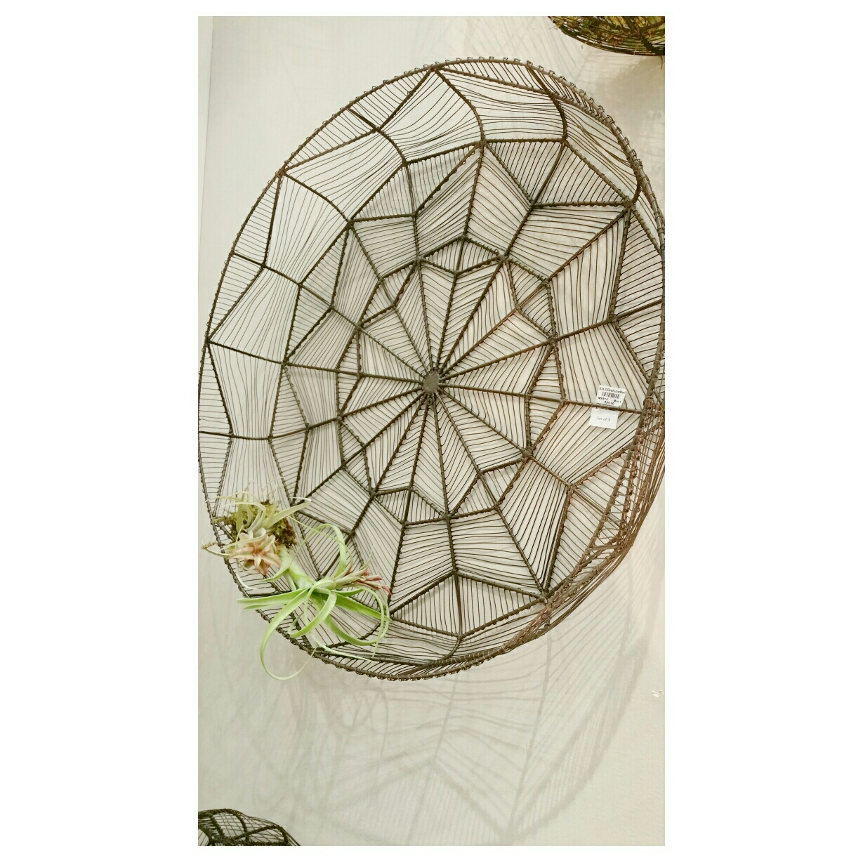 Dream Catcher with Air Plants