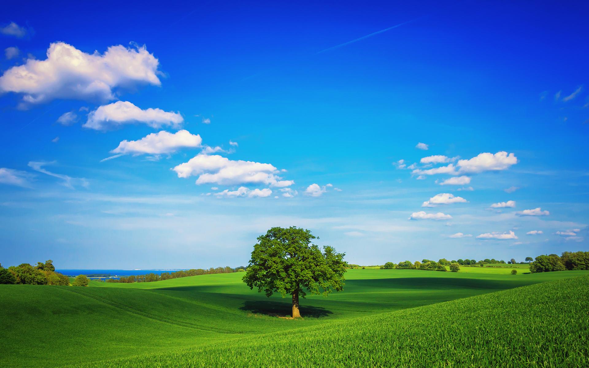Ideal-landscape.jpg