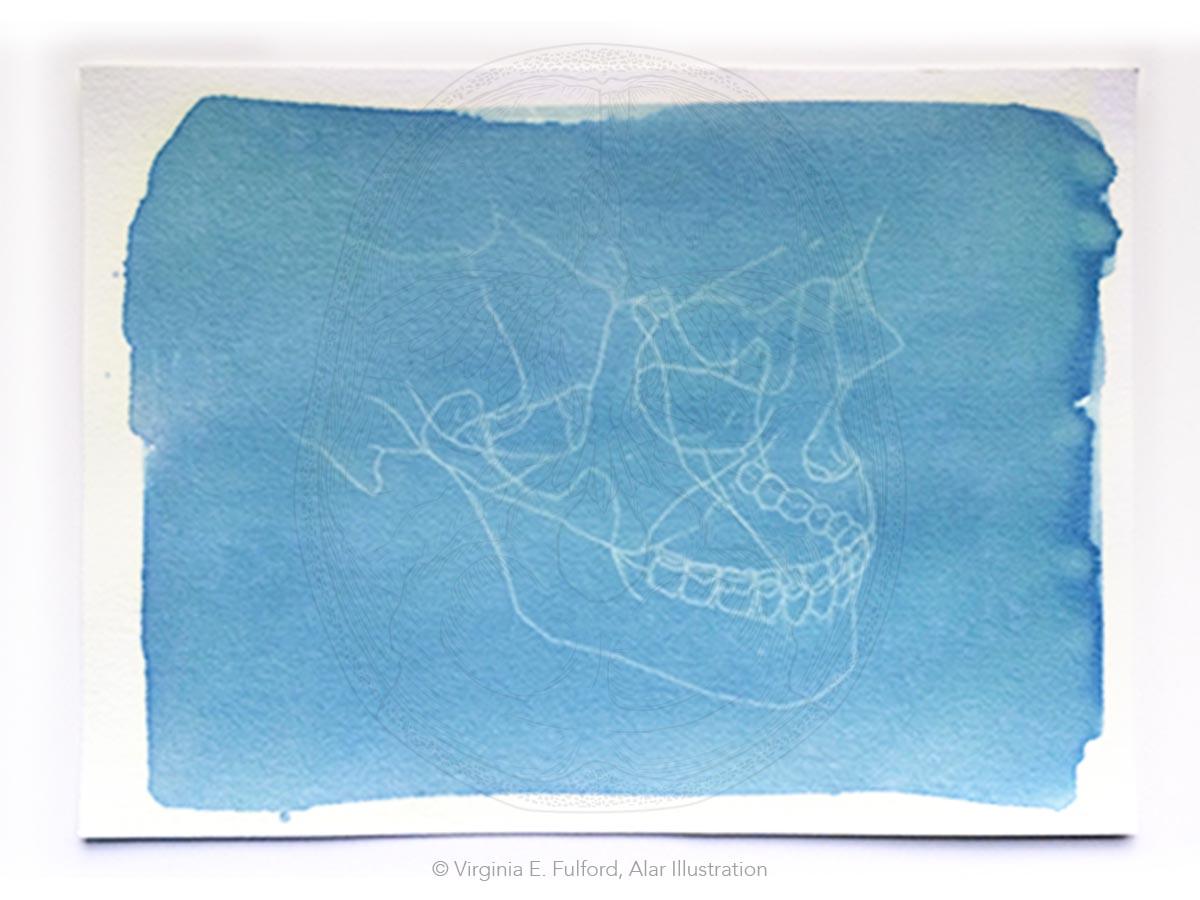 cyanotype_skull5.jpg