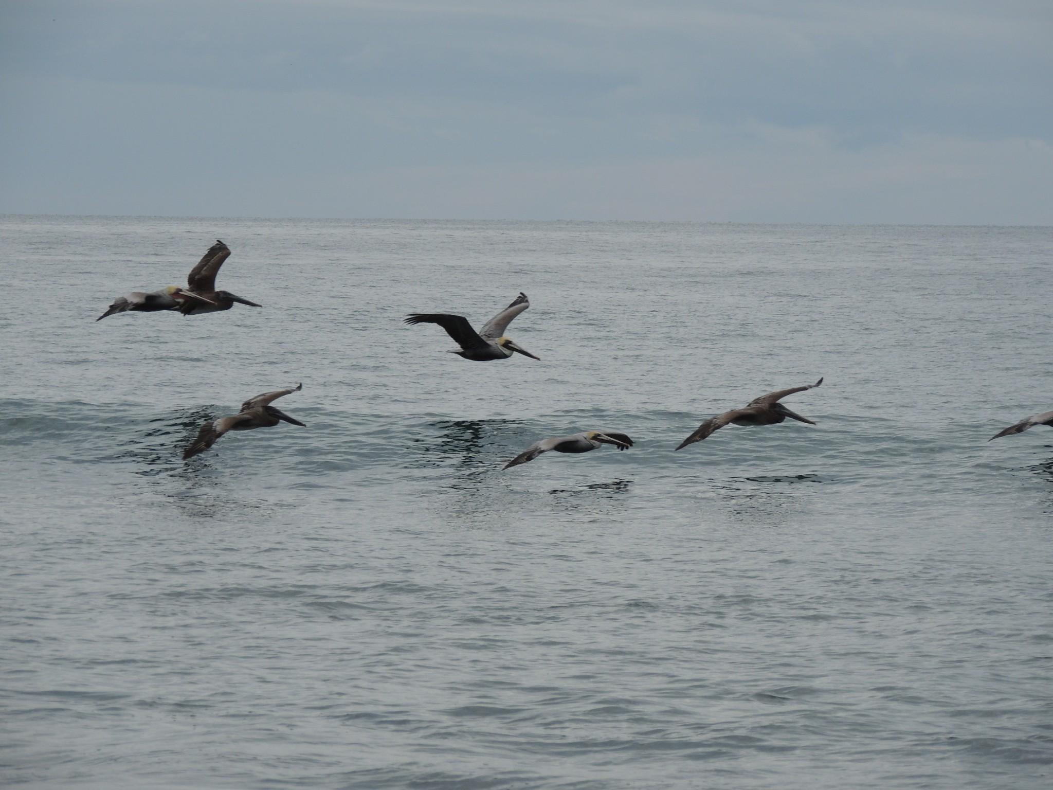 birds flocking seaside