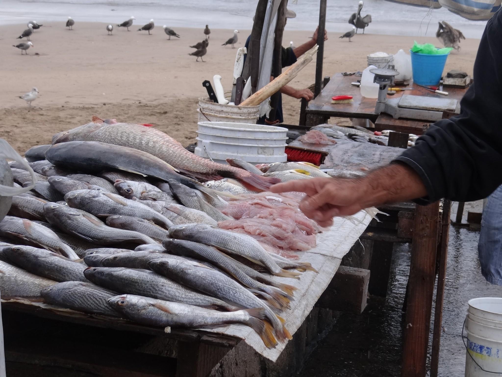 seaside cuisine