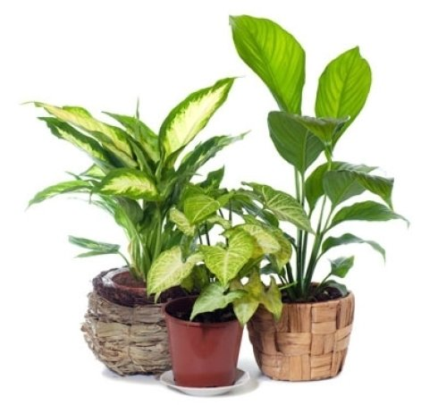 House Plants Can Contribute to Indoor Mold Problems. -