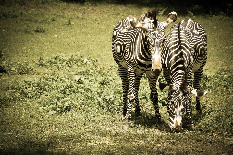Bronx Zoo2 2014 (37 of 68).jpg