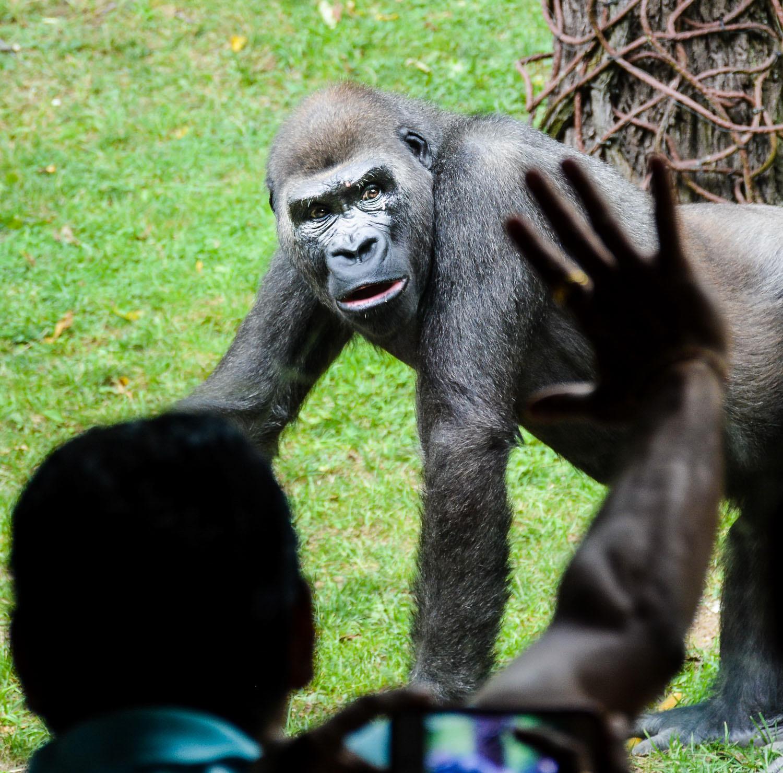 Bronx Zoo2 2014 (47 of 68).jpg