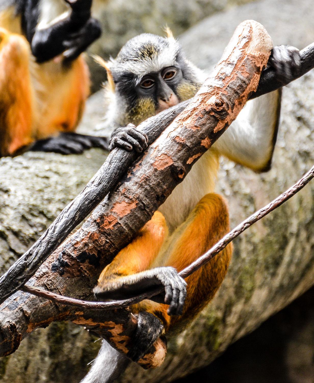 Bronx Zoo2 2014 (41 of 68).jpg