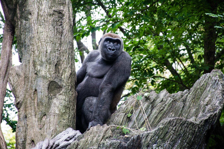 Bronx Zoo 2014 (28 of 50).jpg