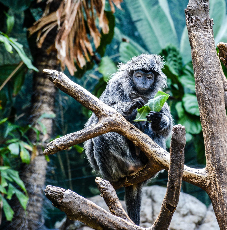 Bronx Zoo2 2014 (24 of 68).jpg