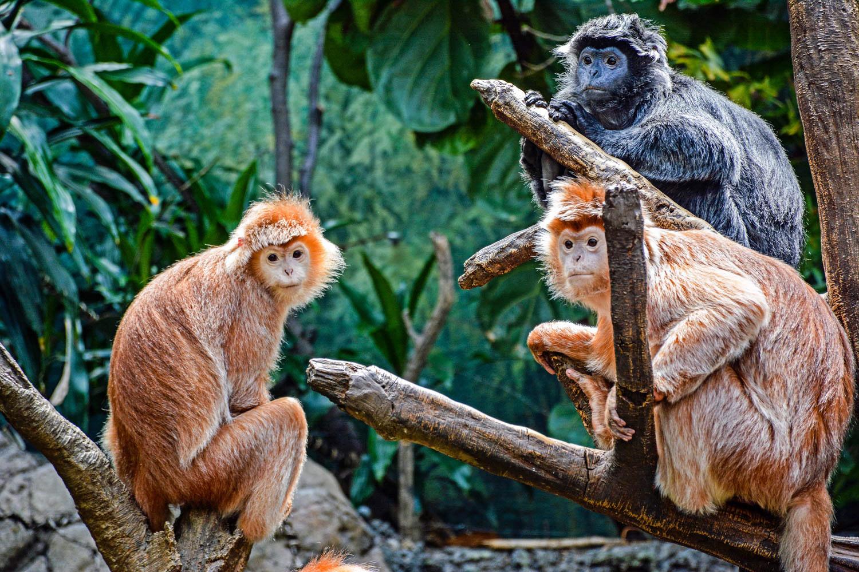 Bronx Zoo2 2014 (30 of 68).jpg