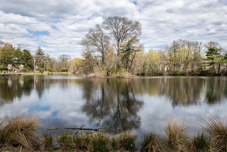 Gardens Lake / Duck Pond, Larchmont