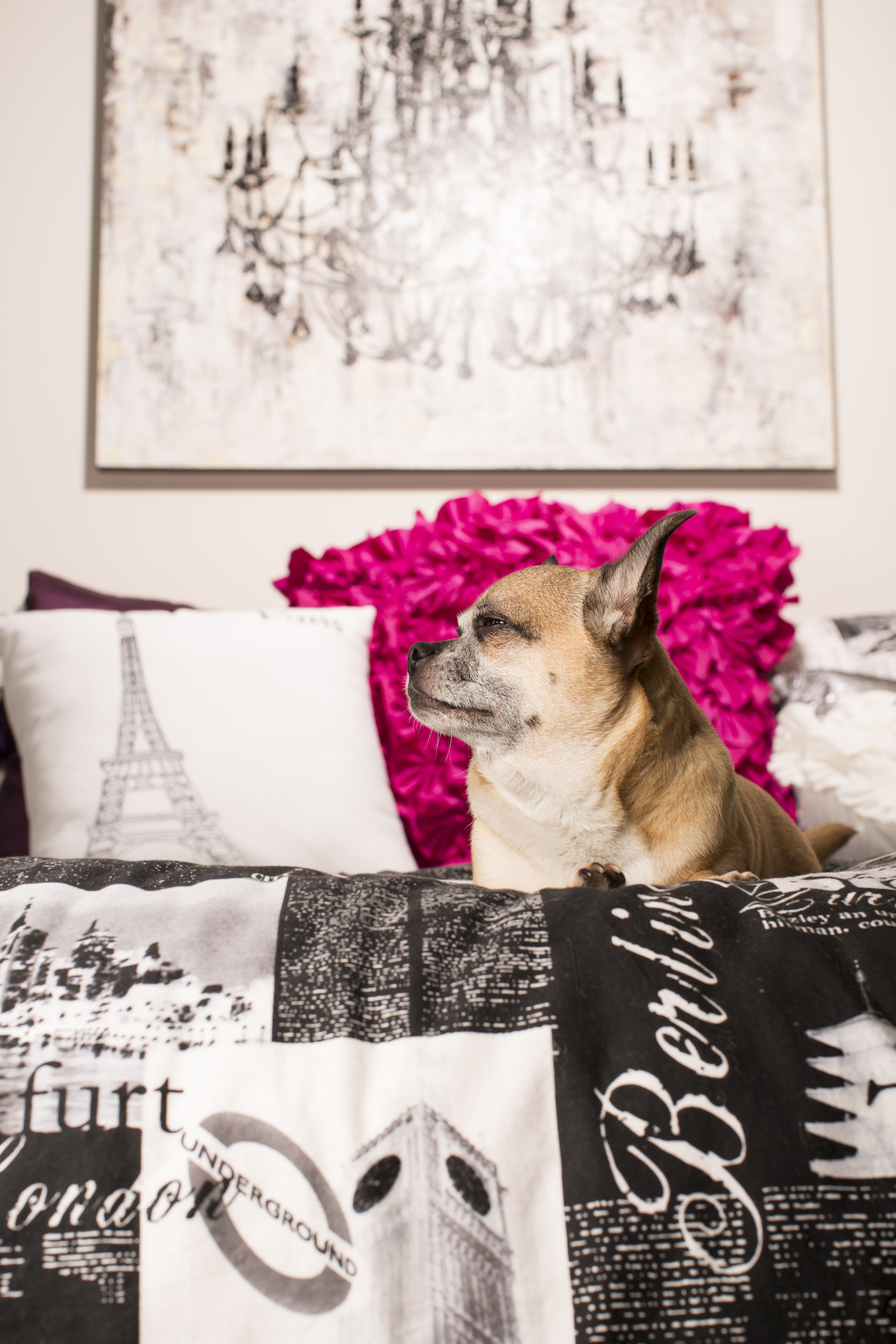 03 Chihuahua dog on location pet photography studio session paris industrial decor.jpg