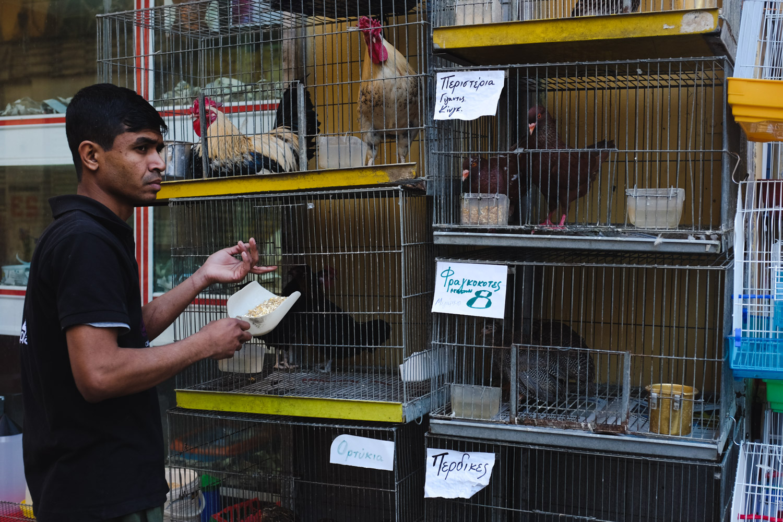 cp greece chicken feed web.jpg