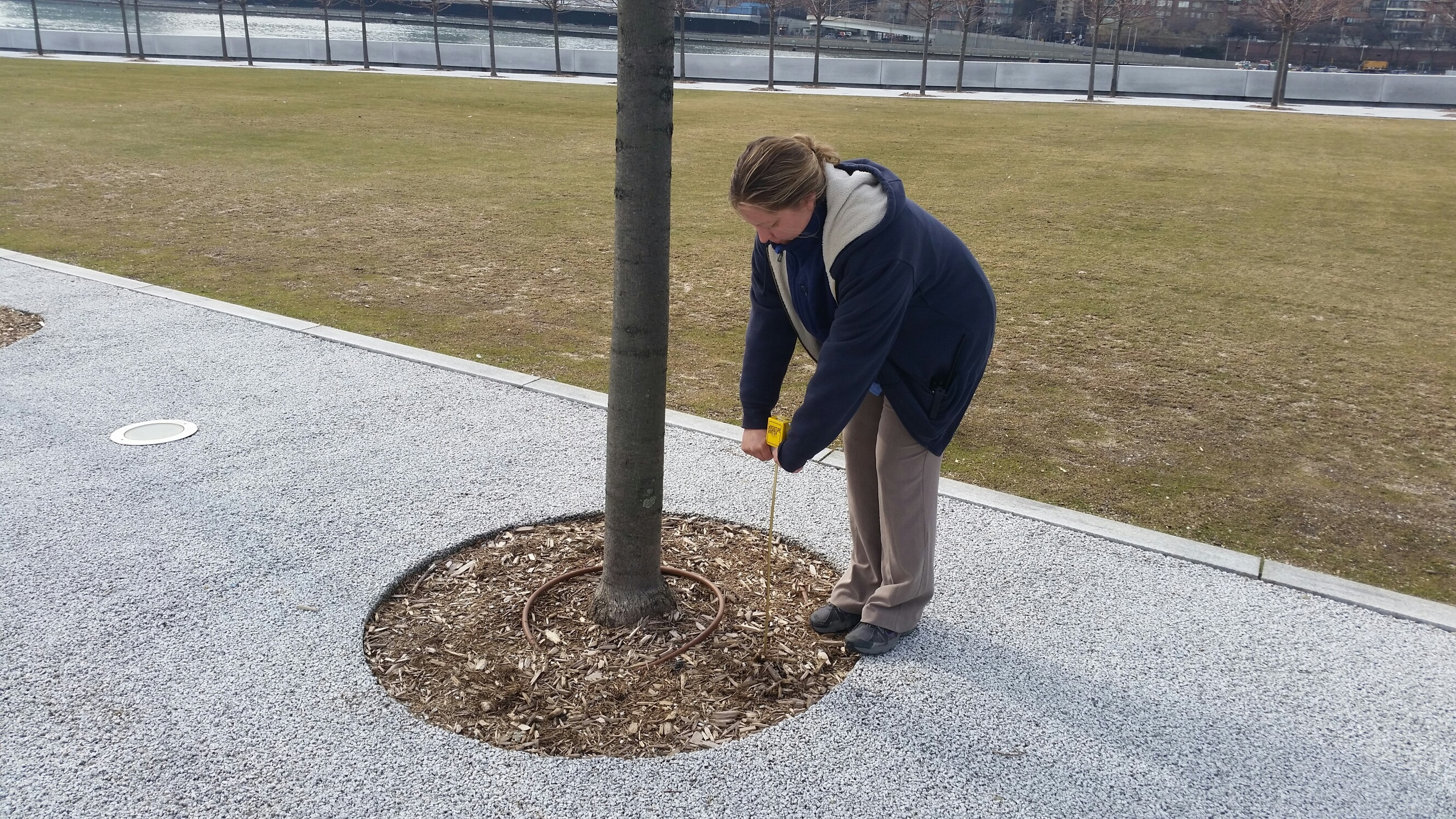 Angela taking a moisture reading at the Park this week.