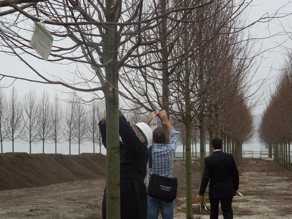 Planting Million Tree Campaign